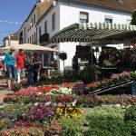 Blumenmarkt in der Merziger Fußgängerzone