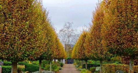 Friedhöfe in Merzig: Friedhof Bietzen