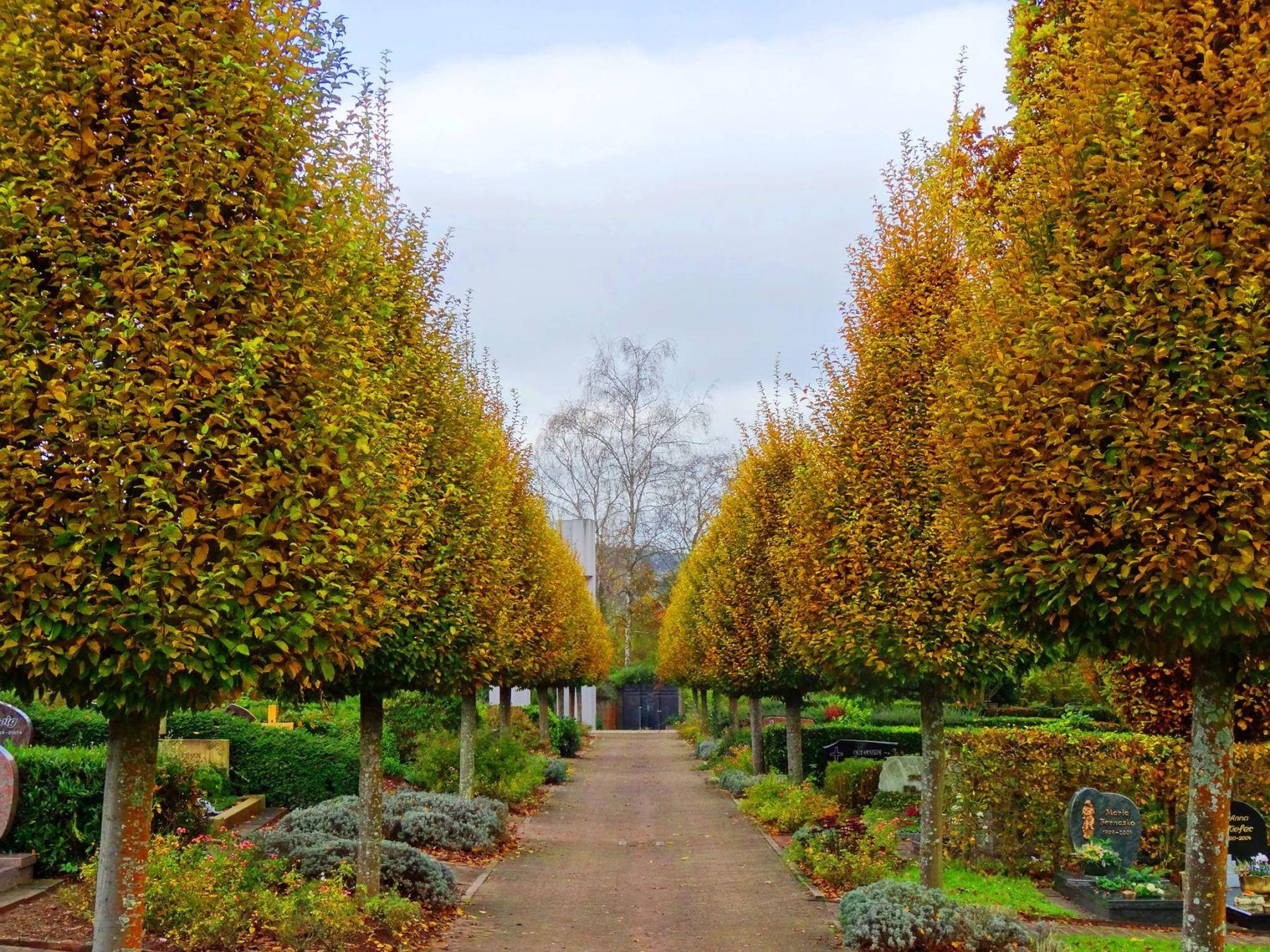 Friedhof Bietzen