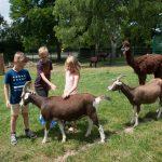 Kinder streicheln Ziegen im Merziger Tierparkfest.