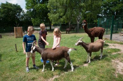 Ziegen und Alpakas im Merziger Tierpark