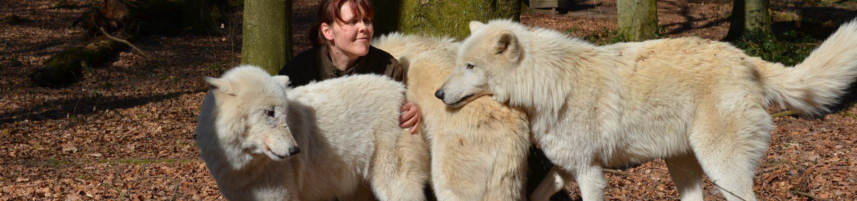 Tatjana Schneider mit Wölfen im Wolfspark Werner Freund