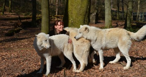 Kreisstadt Merzig: Der Wolfsweg - The Wolf Way