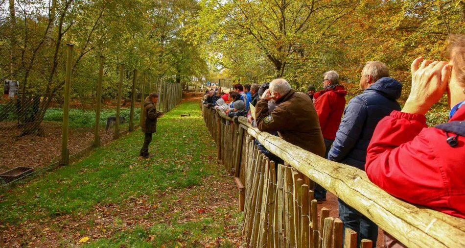 Tatjana Schneider steht vor einem Wolfsgehege und erzählt Besuchern etwas von den Wölfen.
