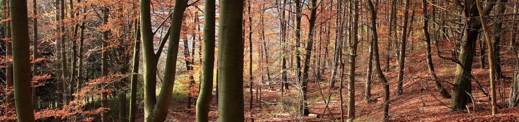 Herbstlicher Wald Merchingen