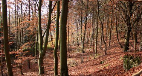 Kreisstadt Merzig: Naturwaldwirtschaft