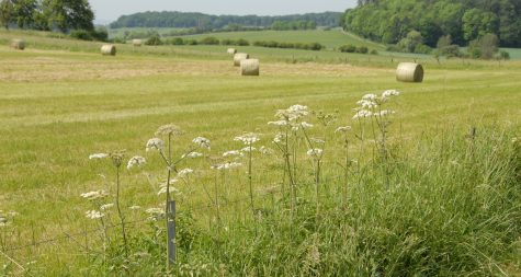 Kreisstadt Merzig: Natur und Landschaft