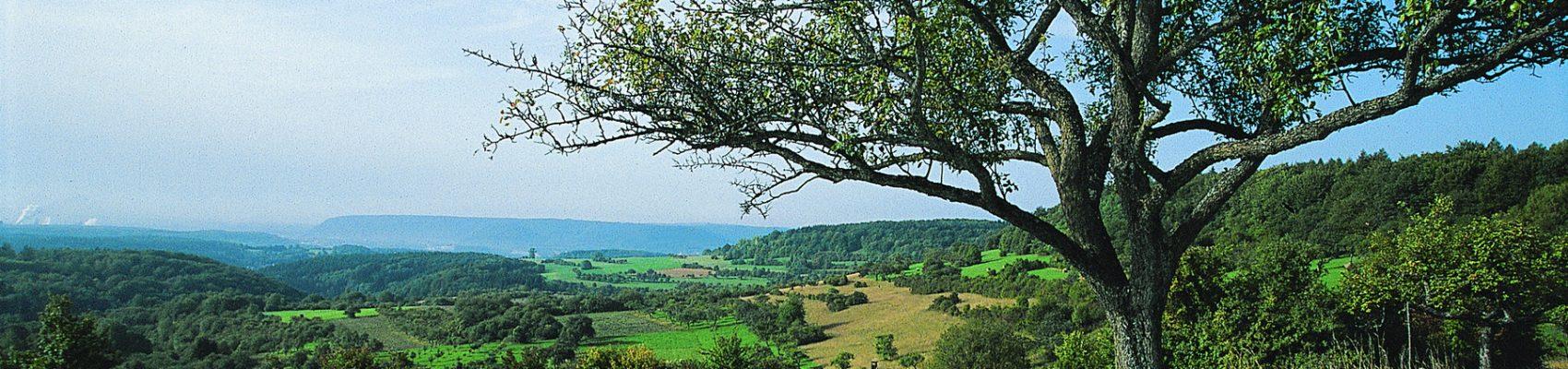 Naturschutzgebiet Wolferskopf