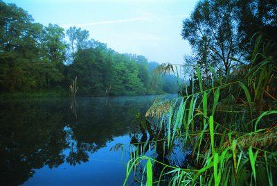 Naturschutzgebiet Saaraltarm