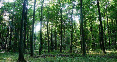 Kreisstadt Merzig: Naturnahe Waldwirtschaft