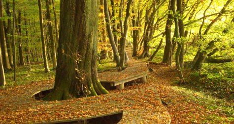 Kreisstadt Merzig: Waldbau mit Zertifikat
