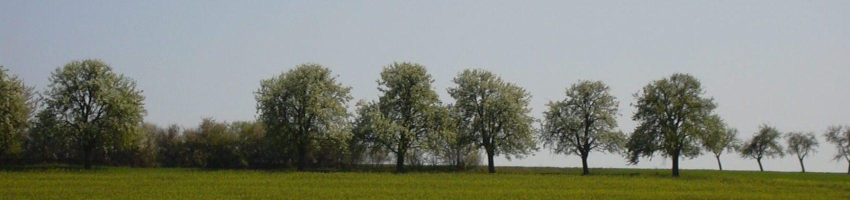 Auf dem Bild sind Bäume auf einer Streuobstwiese zu sehen.