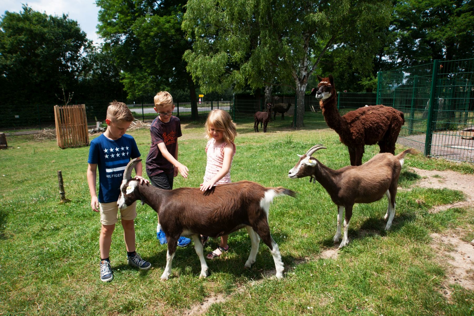 In this picture one can see children petting goats at Merzig Zoo.