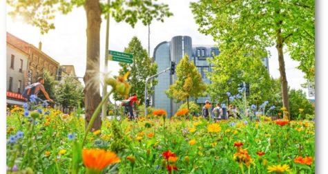 Pressemeldung:  Kreisstadt Merzig plant Maßnahmen für Umwelt und Klima