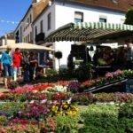 Merziger Blumenmarkt