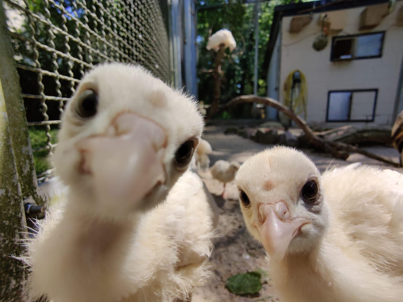 Dieses Bild zeigt den Putennachwuchs im Merziger Tier- und Archepark.